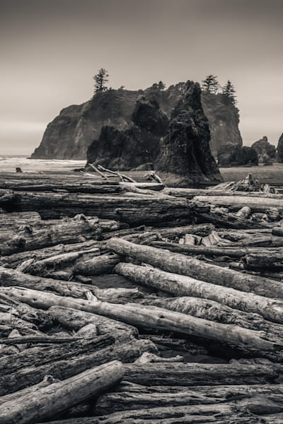 Logs Second Beach Wa Photography Art | Dan Katz, Inc.
