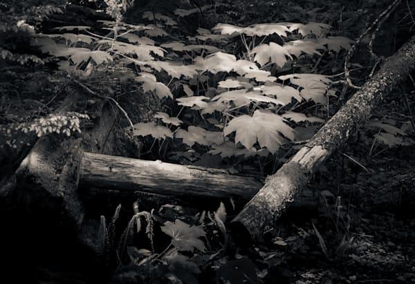 Off The Path Edit Photography Art | Dan Katz, Inc.