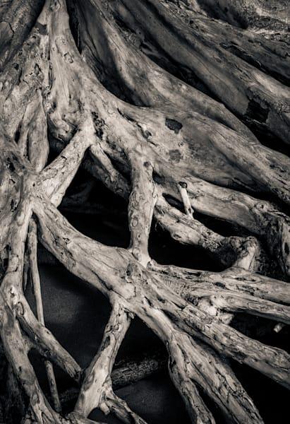 Tree Roots On The Beach Maui Photography Art | Dan Katz, Inc.