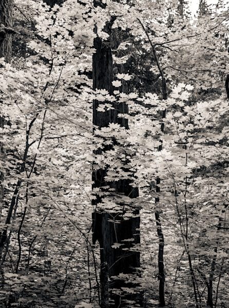 Alive In The Forest Photography Art | Dan Katz, Inc.