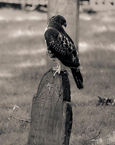 Spotted Eagle Cambridge Ma Photography Art | Dan Katz, Inc.