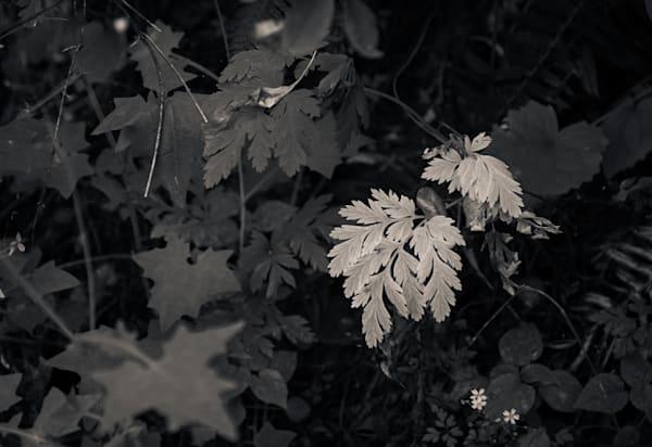 In The Forest 2 Photography Art | Dan Katz, Inc.