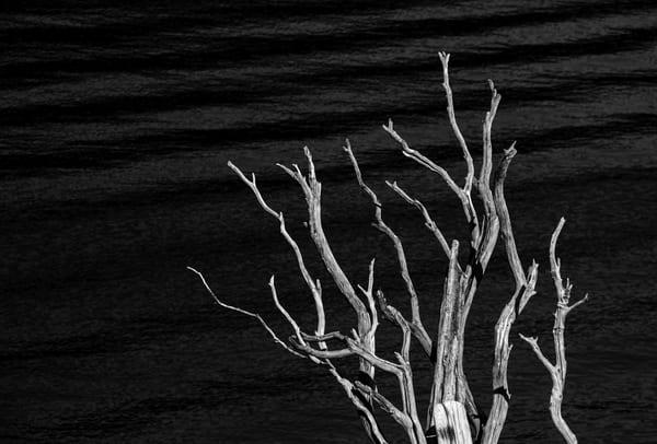 Dead Tree Shasta Lake Photography Art | Dan Katz, Inc.