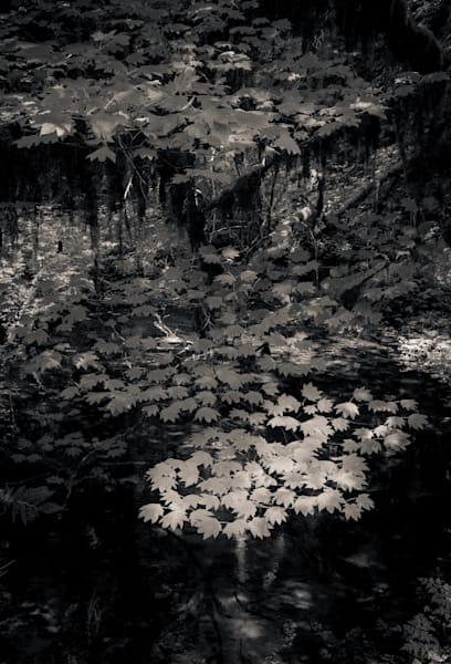 Hoh Rain Forest 2 Wa Photography Art | Dan Katz, Inc.