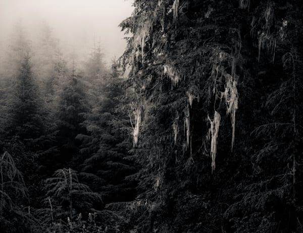 Spanish Moss Forks Wa Photography Art | Dan Katz, Inc.