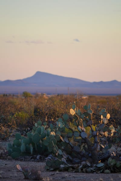 Photograph of cactus and mountains for sale as Fine Art