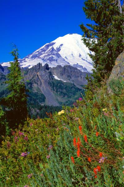 Mountain wildflower meadow, Mount Rainier, Mount Rainier National Park