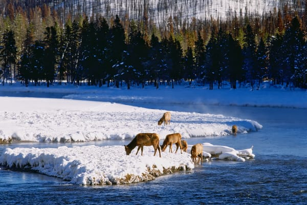 Yellowstone In Winter Photography Art   ePictureGallery