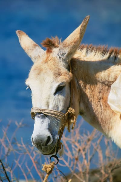 Donkey In Greece Photography Art   ePictureGallery
