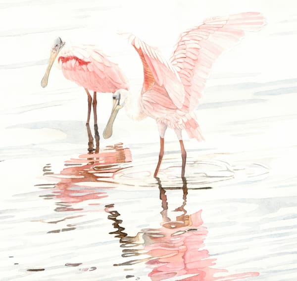 A print, on fine-art paper,  of a watercolor painting of two Spoonbills on the water by watercolor artist Sandra Galloway