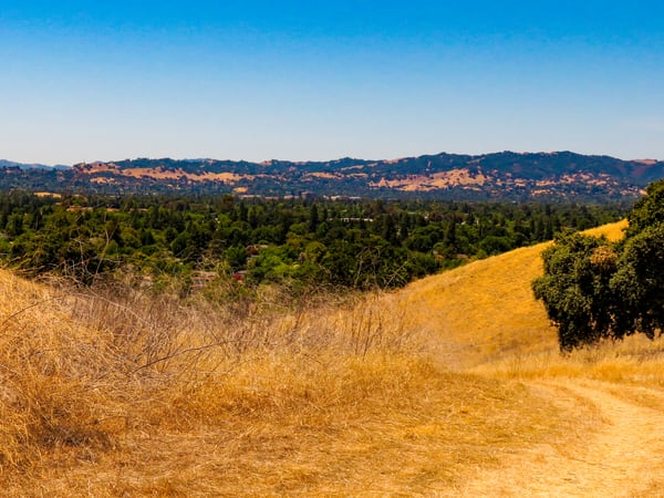 A Ridge Too Far, Lime Ridge Open Space, Walnut Creek, CA