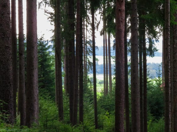 Swarzwald (Black Forest), Braunlingen, Germany