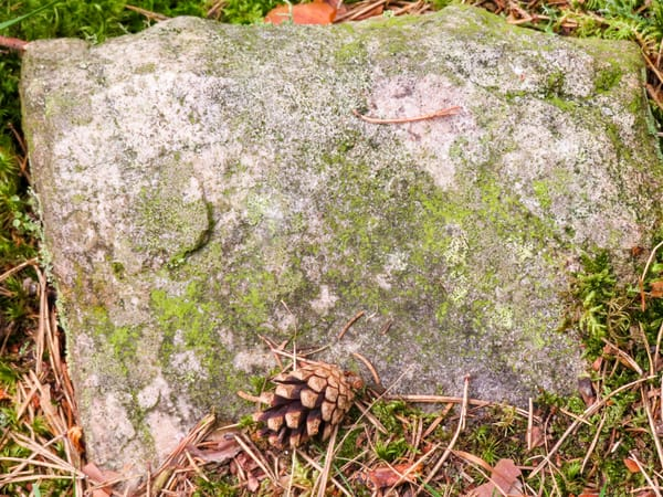 Rock with Pine Cone