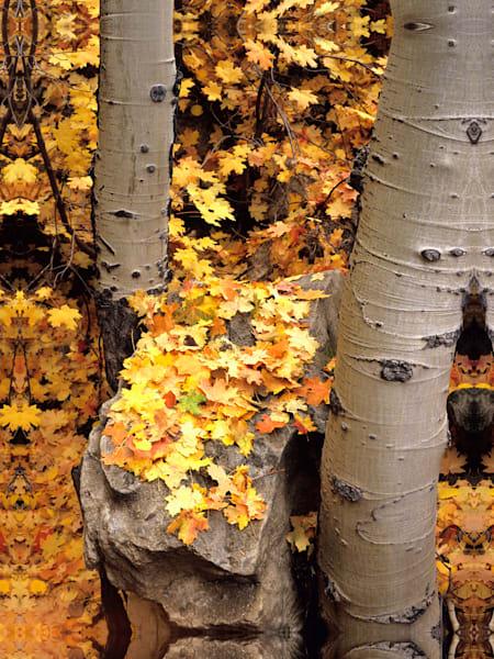 Autumn Aspens Photography Art | Craig Primas Photography