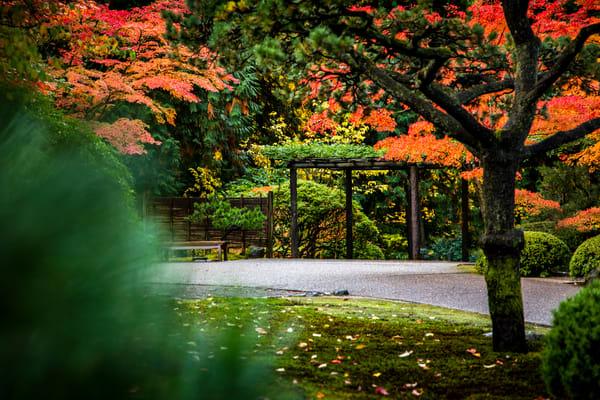 Japanese Garden Art   Earth Trotter Photography