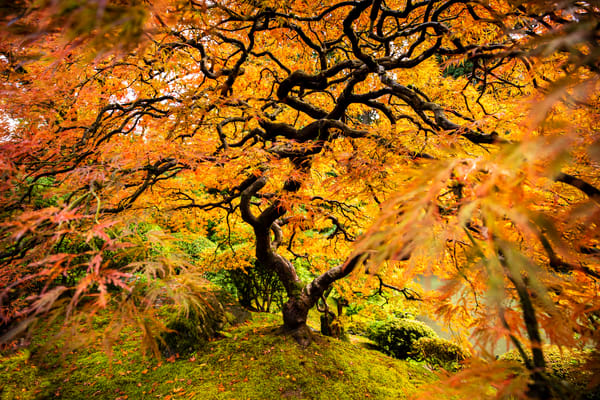 Autumn Ic Bomb Art | Earth Trotter Photography