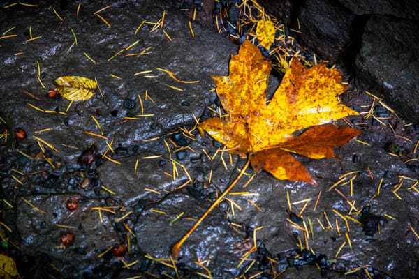 Autumn's Aftermath Art | Earth Trotter Photography