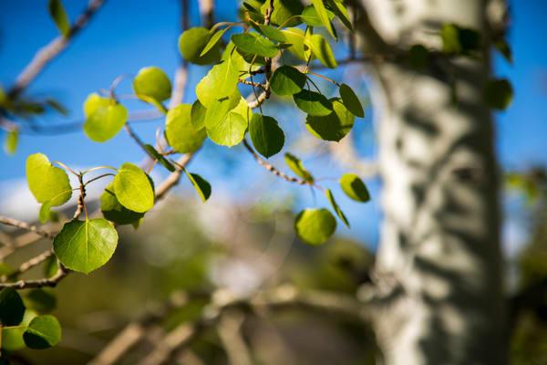Make Like A Tree Art | Earth Trotter Photography