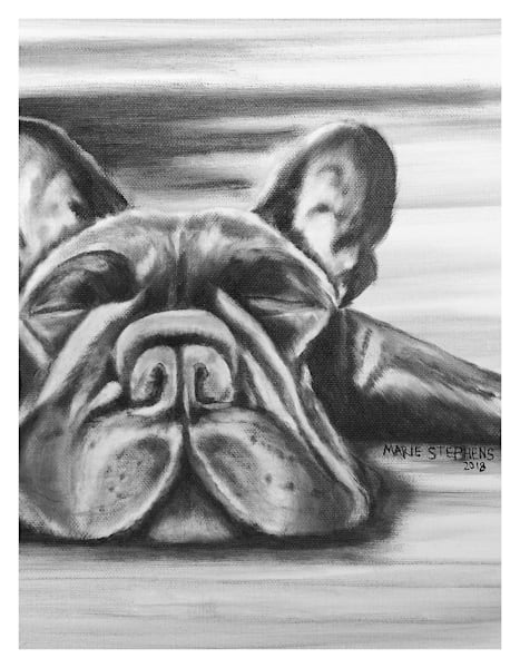 Black And White Frenchie Sleeping For Digital Print 8.5 X 11 On 120 Pound Coated Cover Stock Art | Marie Stephens Art