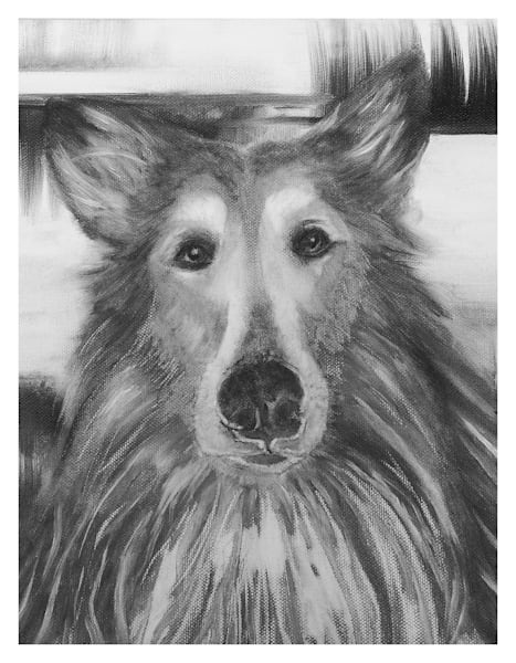 Collie Black And White For Digital Print 8.5 X 11 On 120 Pound Coated Cover Stock Art | Marie Stephens Art