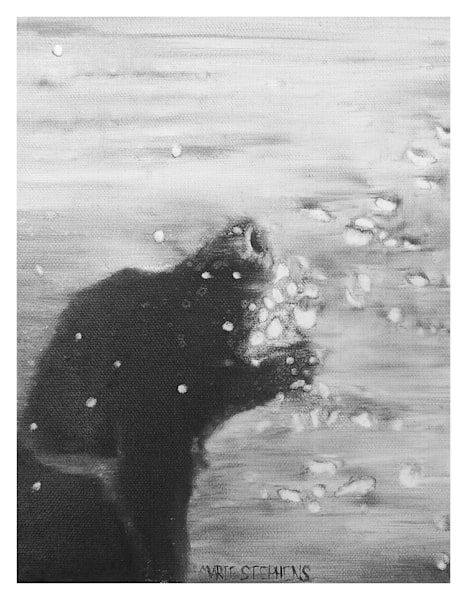 Lab Catching Water Black And White For Digital Print On 8.5 X 11 120 Pound Coated Cover Stock Art | Marie Stephens Art