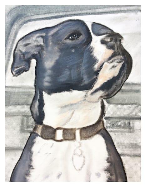 Black And White Pitbull With White Border  Art   Marie Stephens Art