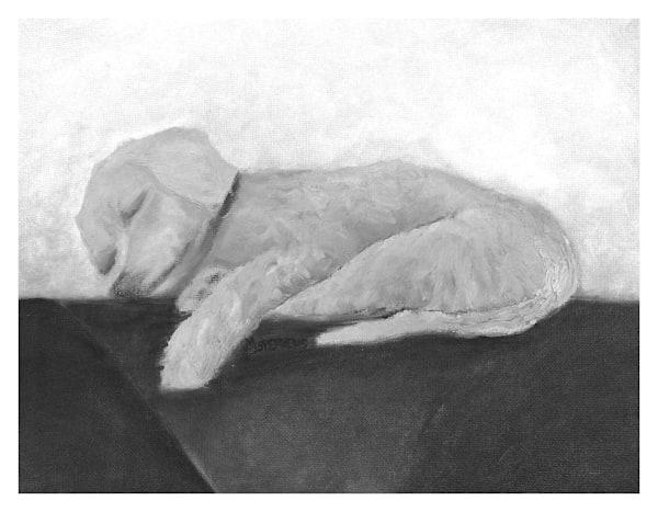 Sound Asleep Dog Portrait Wall Art Print