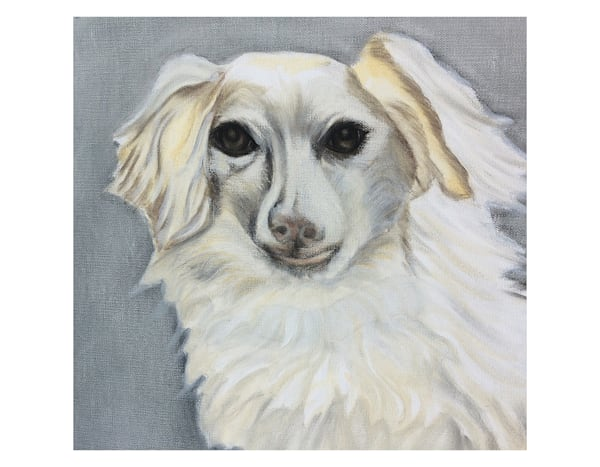 White Long Haired Doxie For Digital Print On 8.5x11 120 Pound Coated Cover Stock Art   Marie Stephens Art