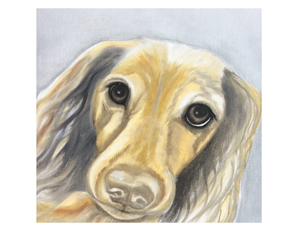 Tan Long Haired Doxie For Digital Print 8.5 X 11 On 120 Pound Coated Cover Stock Art   Marie Stephens Art