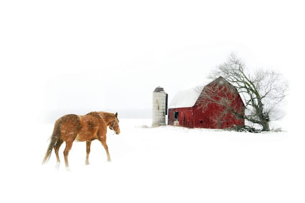 Coming Home is a horse going back to his barn/ Shop fine art photography by An Artist's View Photography