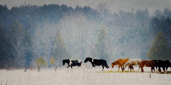 Winter Horses is arealistic winter scene at a farm/ Shop fine art photography by An Artist's View Photography