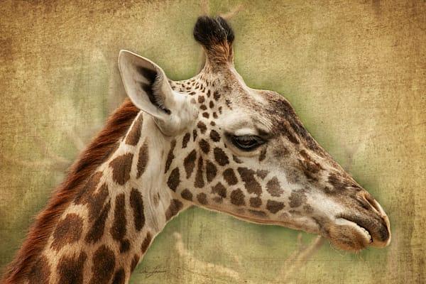 Giraffe is a handsome giraffe/ Shop fine art photography by An Artist's View Photography