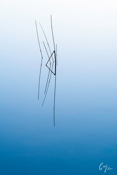 Constance Mier abstract nature photography - simple designs from nature captured beautifully from the Everglades