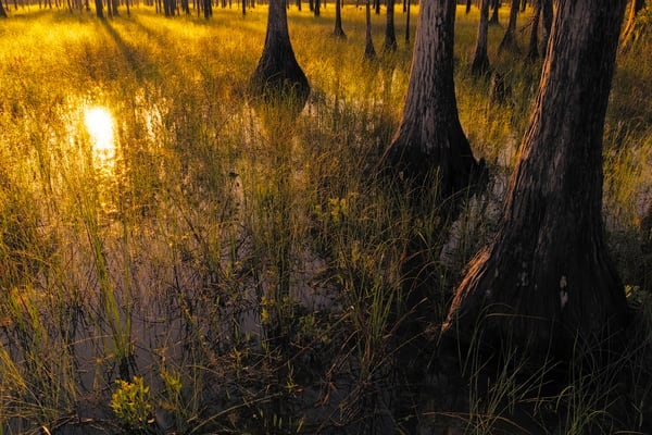 Constance Mier everglades photography - capturing some of Florida's beautiful wilderness