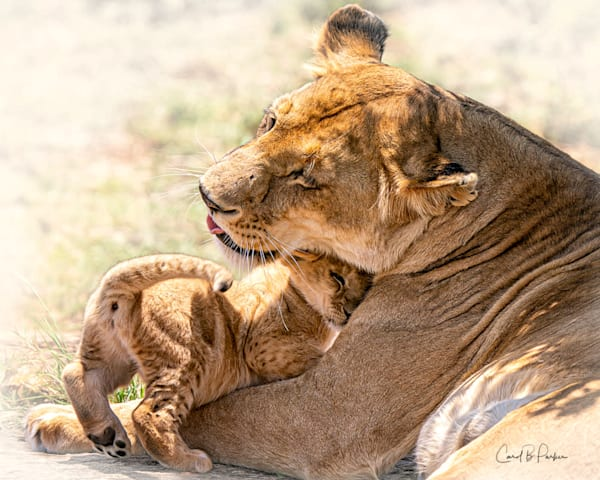 A Mother's Love   Deluxe Photography Art | Carol Brooks Parker Fine Art Photography