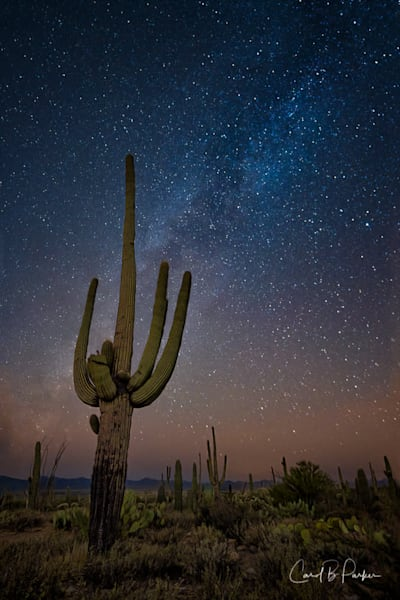 Saguaro Under The Milky Way   Deluxe Photography Art | Carol Brooks Parker Fine Art Photography