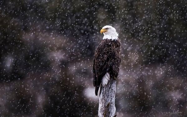 1671 Snowbird