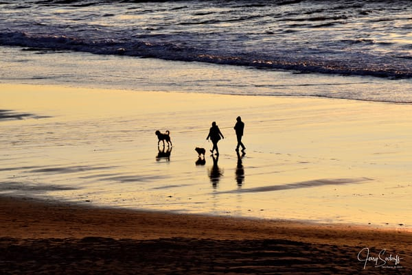 Two Dogs and Their Parents Walking Beach at Sunset