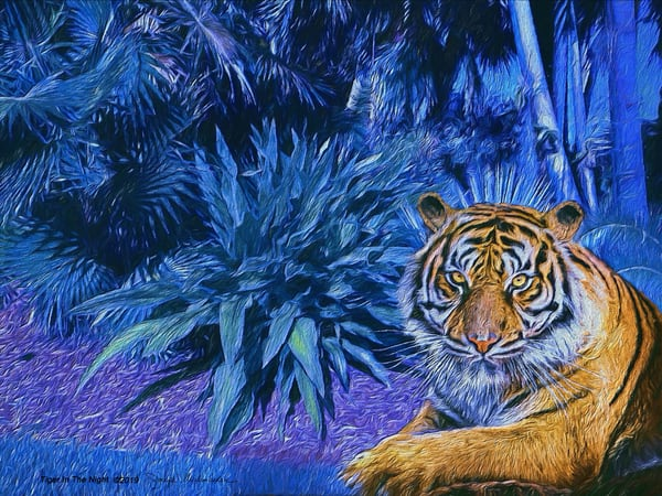 Tiger In The Night - The Gallery Wrap Store