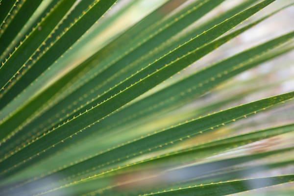 Cactus Closeup Photography Art | Leiken Photography