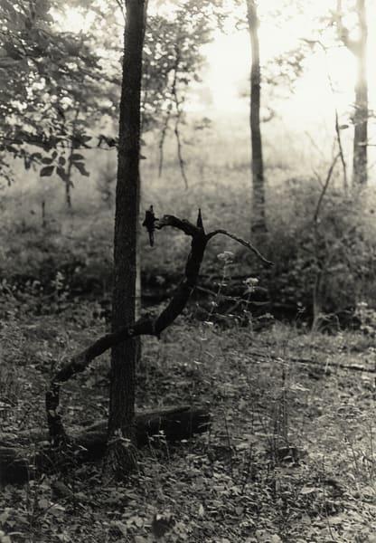 Serpentine Branch