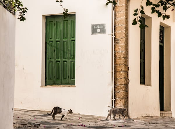 Two Cats, Skopelos, Greece/Sold by Ben Asen Photography