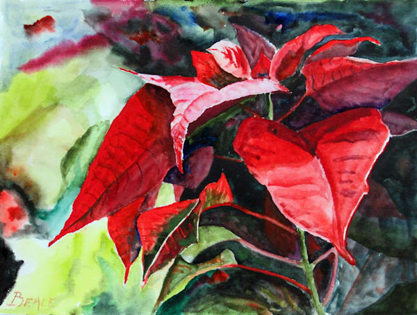Poinsettia Art | David Beale