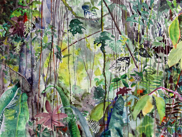 Cloud Forest Santa Elena Art | David Beale