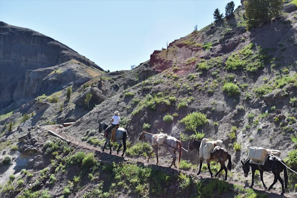 Photograph of a pack string on the Deer Creek Pass trail for sale as Fine Art