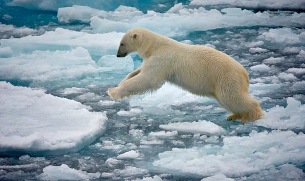 Dsc3640 Svalbard Polar Trip Photography Art | RaberEYES