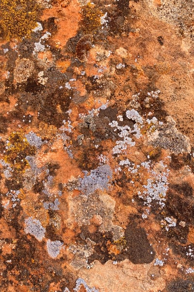 Lichen Abstract Photography Art | ePictureGallery