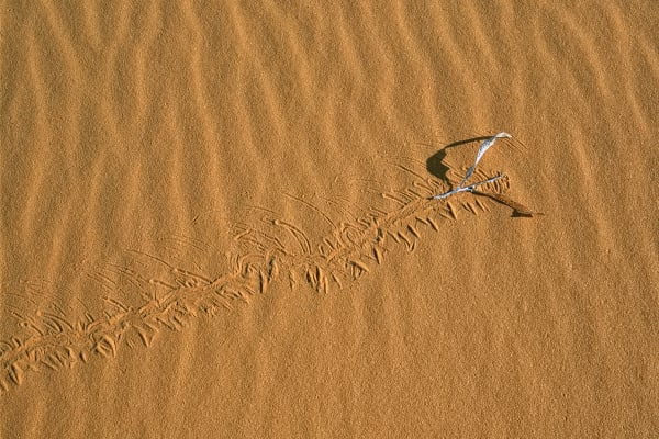 Track In The Sand Photography Art | ePictureGallery