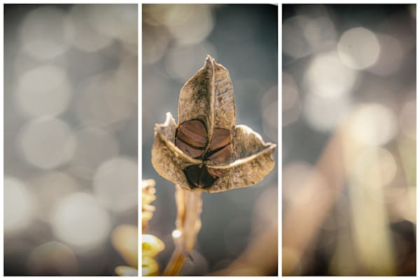 The Seeds That You Plant | Triptychs by Nathan Larson Photography | Fine Art Photography