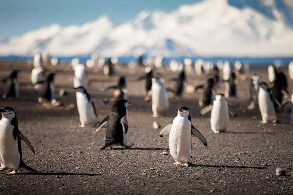 The Penguin Highway Art | Earth Trotter Photography